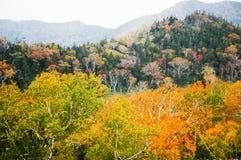 在Shiretoko通行证,北海道,日本的秋叶 免版税图库摄影
