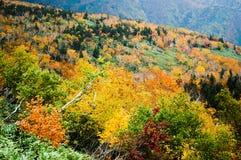 在Shiretoko通行证,北海道,日本的秋叶 图库摄影