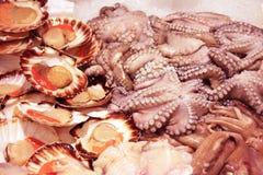 在shopboard的新贝类和章鱼安排 库存照片