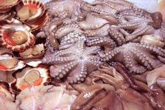 在shopboard的新贝类和章鱼安排 库存图片