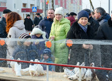 在Shrovetide费斯特期间,人们看见在笼子的鸽子在陈列 免版税库存图片