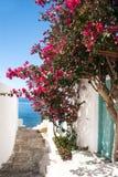 在Sifnos海岛上的传统希腊胡同 库存图片