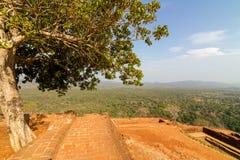 在Sigiriya狮子的岩石宫殿顶部的废墟 图库摄影