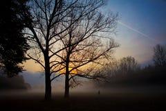 在silhuette日出结构树之后 库存图片