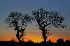 在silhuoette的树 免版税库存照片
