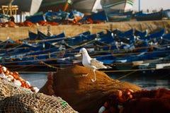 在Skala du Port的小船靠码头的和海鸥在索维拉 免版税库存图片