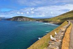 在Slea头和Dunmore之间的美丽的海岸朝向,爱尔兰 免版税库存图片