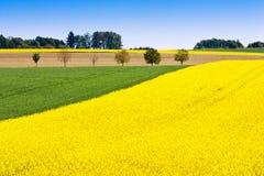 在Sobotka附近的黄色强奸领域,漂泊天堂风景,捷克共和国 免版税图库摄影