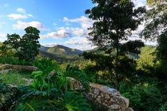 在Soroa,坎德拉里亚角附近的密林 免版税图库摄影