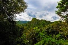 在Soroa,坎德拉里亚角附近的密林 免版税库存图片