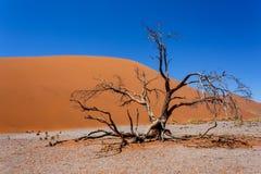 在sossusvlei在sossusvlei纳米比亚,从上面的看法的NamibiaDune 45的沙丘45 免版税库存图片