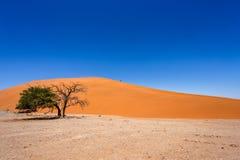 在sossusvlei纳米比亚的沙丘45与绿色树 免版税库存图片