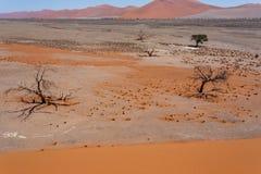在sossusvlei纳米比亚,从一个沙丘45的顶端看法的沙丘45在sossusvlei纳米比亚,从上面的看法 库存图片