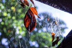 在spiderweb的叶子 免版税库存照片