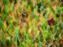 在Spiderweb的露水 免版税库存照片