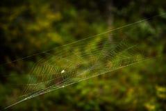 在spiderweb的飞行 免版税库存照片