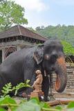 在Sri Dalada Maligawa康提,斯里兰卡的一头大象 免版税库存图片
