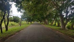 在sri lanaka的美丽的路 免版税库存照片