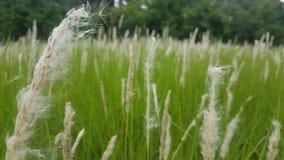 在sri lanaka的美好的草地 免版税库存图片