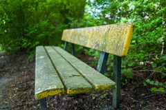 在Stadtpark的一条长凳在威廉港,德国 库存照片