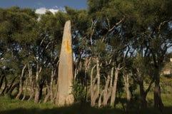 在steale领域的一块方尖碑在Axum,埃塞俄比亚 库存照片