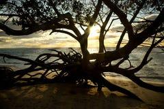 在Stradbroke海岛澳大利亚的日落 库存图片