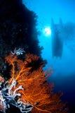 在sulawesi表面附近的珊瑚印度尼西亚 免版税库存图片