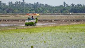 在Sungai Besar,马来西亚的稻田 免版税库存图片