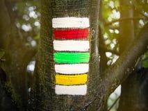 在sunlighted树干的三倍远足的标志,红色绿色黄色 图库摄影