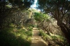 在sunse的美丽的澳大利亚木头 免版税图库摄影
