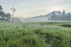 在Suoi近Tia Ho Tuyen Lam湖,大叻市的阳光城市,越南 库存照片