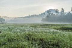 在Suoi近Tia Ho Tuyen Lam湖,大叻市的阳光城市,越南 免版税库存图片