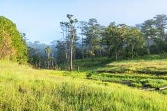 在Suoi近Tia Ho Tuyen Lam湖,大叻市的阳光城市,越南 库存图片
