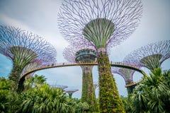 在Supertree树丛的走道滨海湾公园的在新加坡 免版税图库摄影