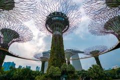在Supertree树丛的走道滨海湾公园的在新加坡 库存照片