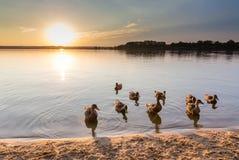 在Svet湖- Trebon,捷克上的日落 库存照片