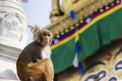 在Swayambhunath猴子寺庙的Stupa在加德满都,尼泊尔 免版税库存图片