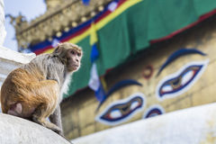 在Swayambhunath猴子寺庙的Stupa在加德满都,尼泊尔 库存图片