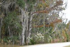 在Sweetwater沼泽地基因斯维尔,佛罗里达的秋天树 图库摄影