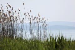 在szigliget附近的balaton湖 免版税库存照片