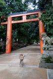 在TÅ 戴籍寺庙Daibutsu,奈良,日本的花托 图库摄影
