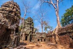 在Ta Phrom,吴哥窟,柬埔寨的树 免版税图库摄影