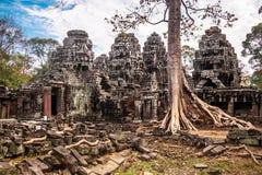 在Ta Phrom,吴哥窟,柬埔寨的树 免版税库存照片