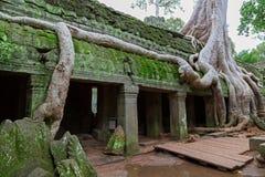 在Ta Prohm, Angkor Wat的结构树 库存照片