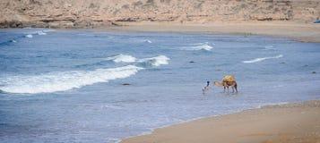 在Taghazout海浪村庄,阿加迪尔,摩洛哥附近供以人员洗涤他的骆驼 免版税库存照片