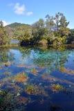 在Takaka在金黄海湾,新西兰附近的PuPu春天 免版税库存照片