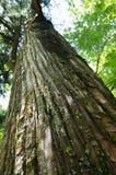 在Takinoo寺庙-日光,日本的树 免版税图库摄影