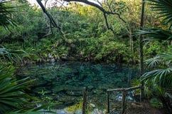 在Tankah的Cenote 免版税库存照片