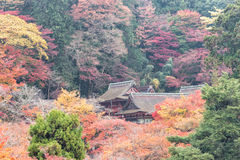 在Tanzan寺庙的五颜六色的秋天,奈良县,日本 库存图片