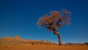 在Tassili nAjjer国家公园离开与金合欢的风景在Moul纳卡人谷在阿尔及利亚 免版税库存照片